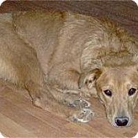 Adopt A Pet :: Annie - Golden Valley, AZ