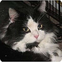 Adopt A Pet :: Oxfur - Fairbury, NE