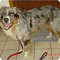 Adopt A Pet :: Keely - Orlando, FL