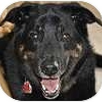 Adopt A Pet :: Maverick - Hamilton, ON