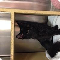 Adopt A Pet :: Molly - Simpsonville, SC