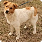 Adopt A Pet :: Penn
