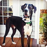 Adopt A Pet :: Samson - Virginia Beach, VA
