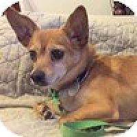 Adopt A Pet :: FRED - Beavercreek, OH