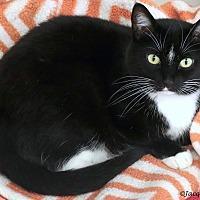 Adopt A Pet :: Michelle - St Louis, MO