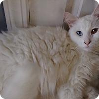 Adopt A Pet :: John travolta - Santa Monica, CA