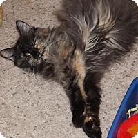 Adopt A Pet :: TX -  Snickers (MCR) - Ben Wheeler, TX
