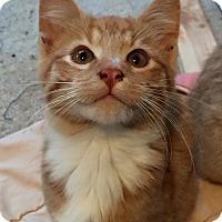 Adopt A Pet :: Garfield - Fredericksburg, VA