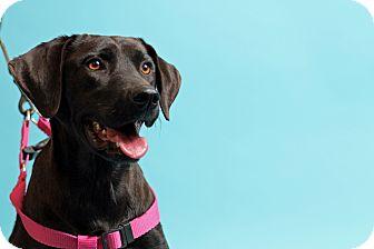 Labrador Retriever Mix Dog for adoption in Carlisle, Tennessee - Dixie