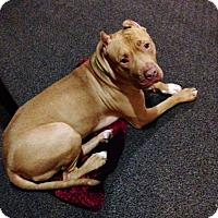 Adopt A Pet :: Pal - Livonia, MI
