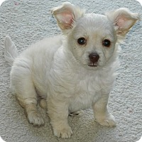 Adopt A Pet :: Sparky - Henderson, NV