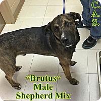 Adopt A Pet :: 1-5 Brutus - Triadelphia, WV