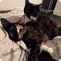 Adopt A Pet :: Smokey - Bentonville, AR