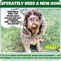 Adopt A Pet :: Wally - Wantagh, NY