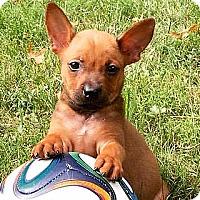Adopt A Pet :: Sparta - Staunton, VA