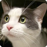 Adopt A Pet :: Beau and Bruja - Montclair, NJ