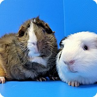 Adopt A Pet :: Hepburn and Bill - Lewisville, TX