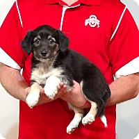 Adopt A Pet :: Chloe - Gahanna, OH