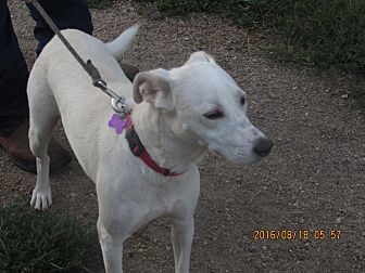 Labrador Retriever Mix Dog for adoption in Walthill, Nebraska - Whisper