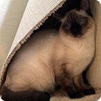 Adopt A Pet :: Nori - Tiburon, CA