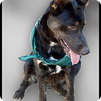 Adopt A Pet :: Kora no hang ups - Sacramento, CA
