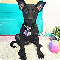 Adopt A Pet :: Hamlet - Castro Valley, CA