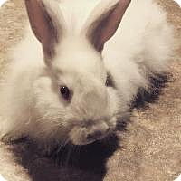 Adopt A Pet :: Peter - Woburn, MA