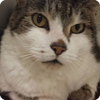 Adopt A Pet :: Mingus 5264 - Joplin, MO