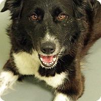 Adopt A Pet :: CHRISTMAS CAROL - San Pedro, CA