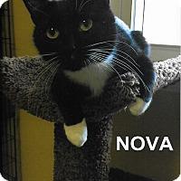 Adopt A Pet :: Nova - Medway, MA