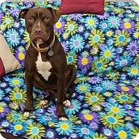 Adopt A Pet :: Fancy Pants - Hagerstown, MD