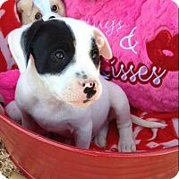 Adopt A Pet :: MIKKO - East Windsor, CT