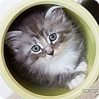 Adopt A Pet :: Patrick - Irvine, CA