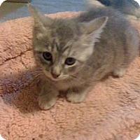 Adopt A Pet :: Riley - Monroe, GA