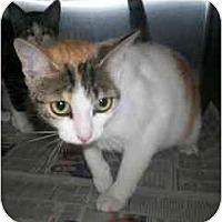 Adopt A Pet :: Jill - Markham, ON