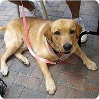 Adopt A Pet :: Diesel - Altmonte Springs, FL
