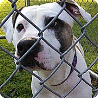 Adopt A Pet :: Mo - Sinking Spring, PA