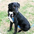 Adopt A Pet :: COLEMAN