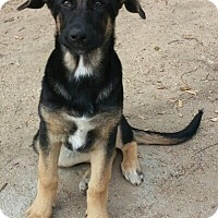 Adopt A Pet :: Roxy Puppy - Temecula, CA
