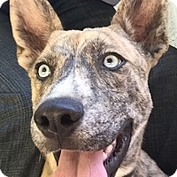 Adopt A Pet :: Hank, so sweet! - Sacramento, CA