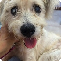Adopt A Pet :: Anna (FL) - Brunswick, GA