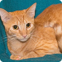 Adopt A Pet :: Jeter - Elmwood Park, NJ