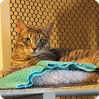 Adopt A Pet :: Troutman - Carlisle, PA