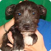 Adopt A Pet :: Fajita - Oviedo, FL