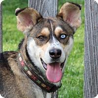 Adopt A Pet :: Jasper - Aurora, IL