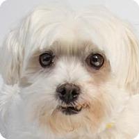 Adopt A Pet :: Mazie - Colorado Springs, CO