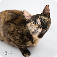 Adopt A Pet :: Callie - Stafford, VA