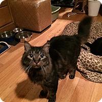 Adopt A Pet :: Winston - Ronkonkoma, NY