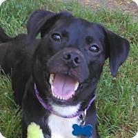 Adopt A Pet :: Nadia - Grand Rapids, MI