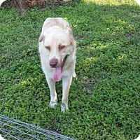 Adopt A Pet :: Kenai - Olympia, WA